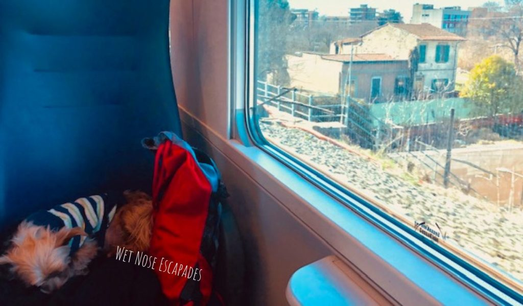 Yorkie dog on train in Italy
