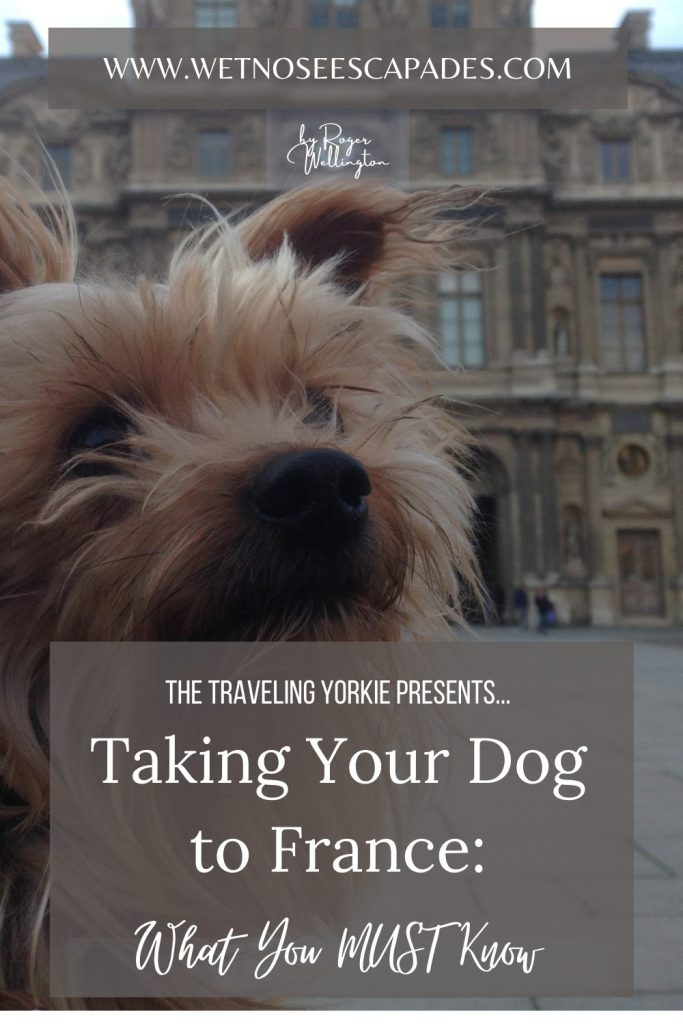Taking Your Dog to France Guide