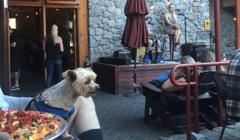 dog friendly south lake tahoe, live music with dog