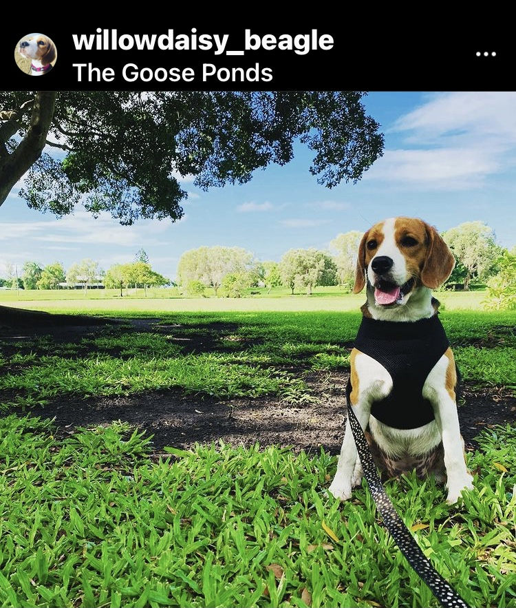 dog friendly mackay goose ponds