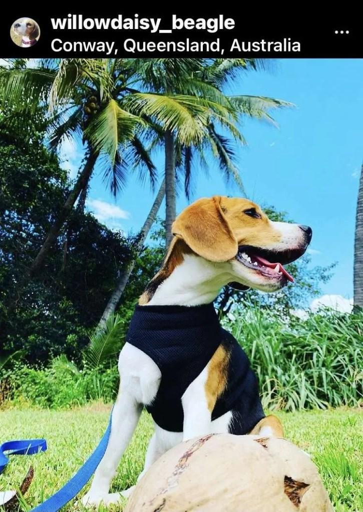 dog friendly conway queensland australia