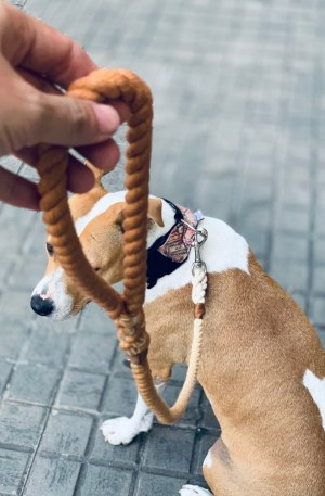 correa-perro-marron