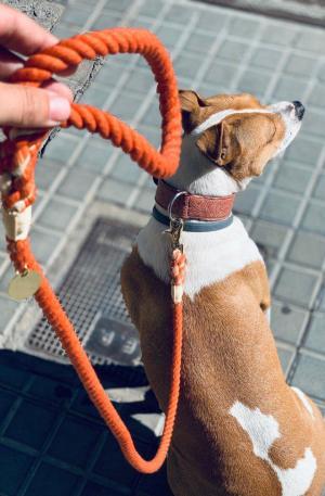 correa-perro-naranja