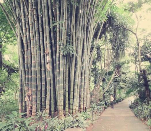 Suchbild: Wo ist Caro? Und was ist das bitte für ein Bambus?