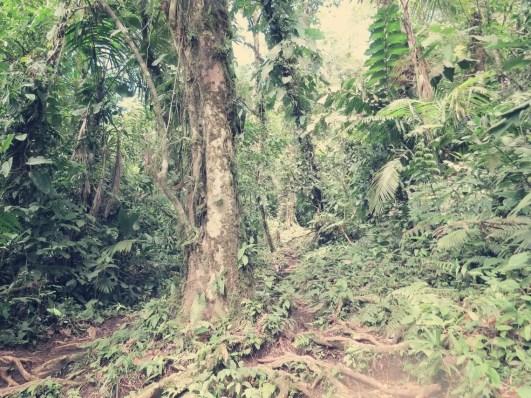 Deep in da Jungle