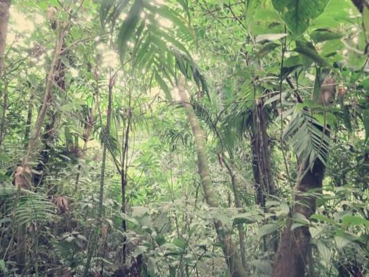 Dschungelweg runter zum Kratersee