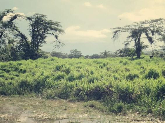 Costa Rica bietet einfach so viele Facetten der Vegetation
