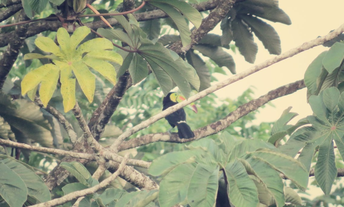 Mit Glück auch noch einen Tukan fotografiert, ...die lassen sich nicht so oft blicken.