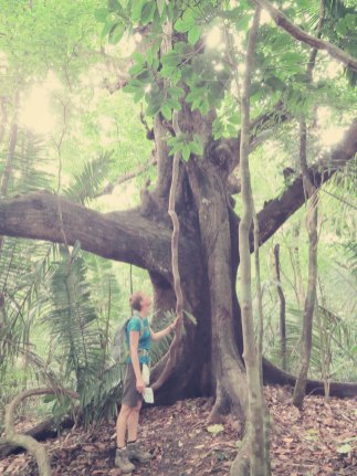 Tarzan würde sich über die Lianen freuen ...