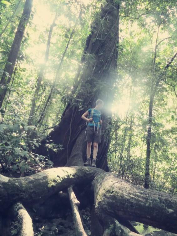 Große Bäume sind toll!