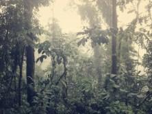 Wenn es in Costa Rica regnet, ...