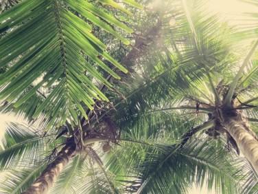 Blick nach oben von der Palmenliege aus