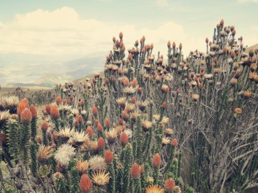 Das es auf der Höhe noch so schöne Vegetation gibt