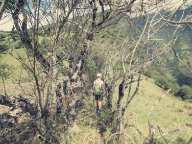 Zwischen Stacheldraht und Bäumen