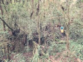 Ruinen im Dschungel - so sah auch mal Machu Picchu aus