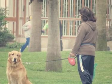 Frühsport in Miraflores - gefällt nicht jedem