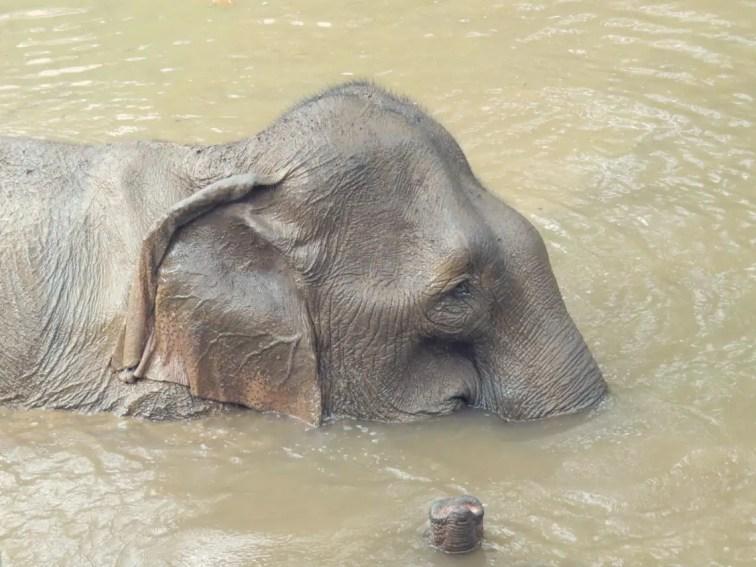 Viel schöner als Elefantenreiten