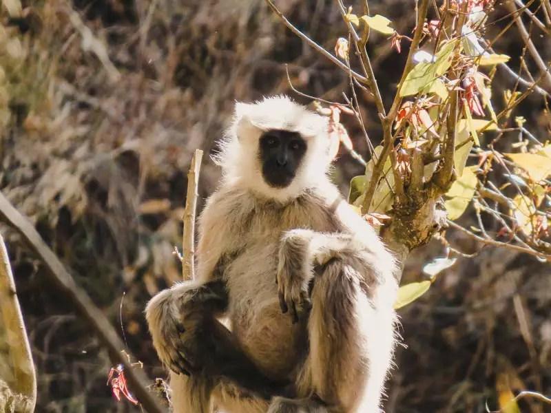 Annapurna Trek Tiere
