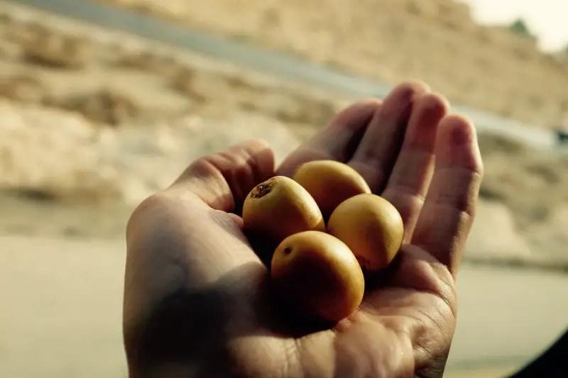 Frische Datteln, Jordanien