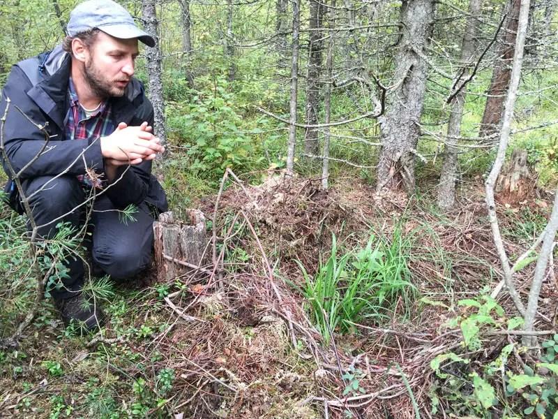 bärennest estland alutaguse