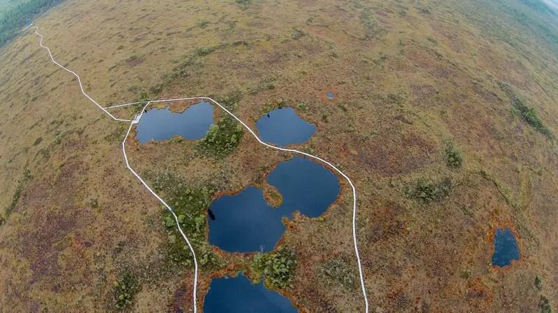 estland soomaa nationalpark kuresoo hochmoor aus der luft von oben