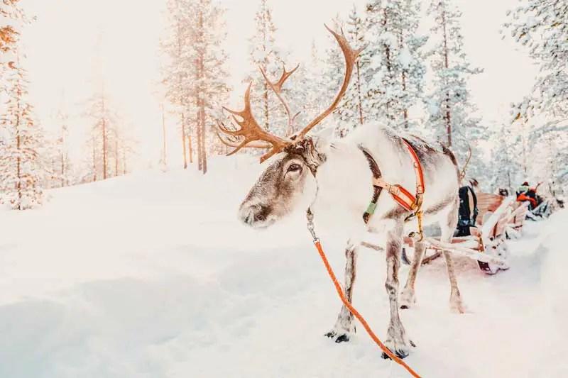 Reiseziele Dezember Lappland
