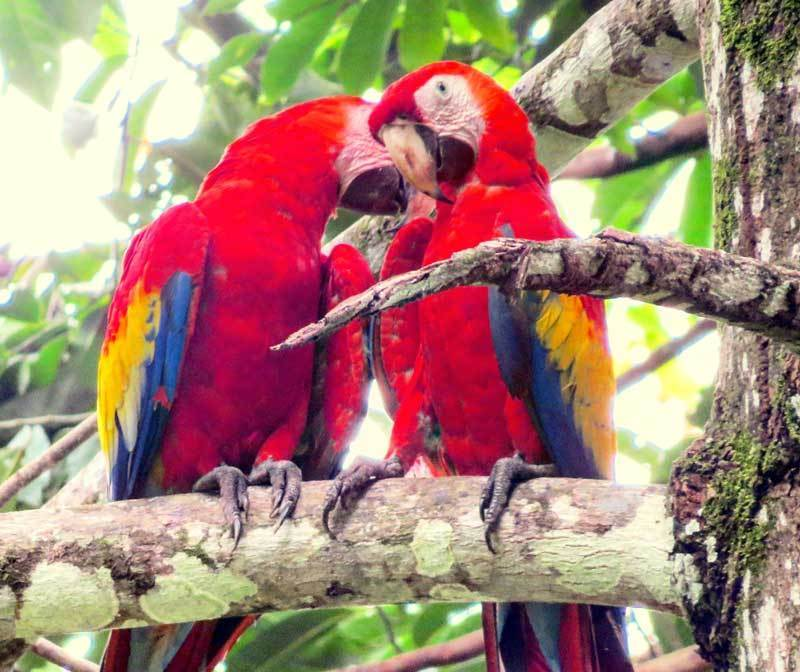 Reisetipps 2019 Costa Rica