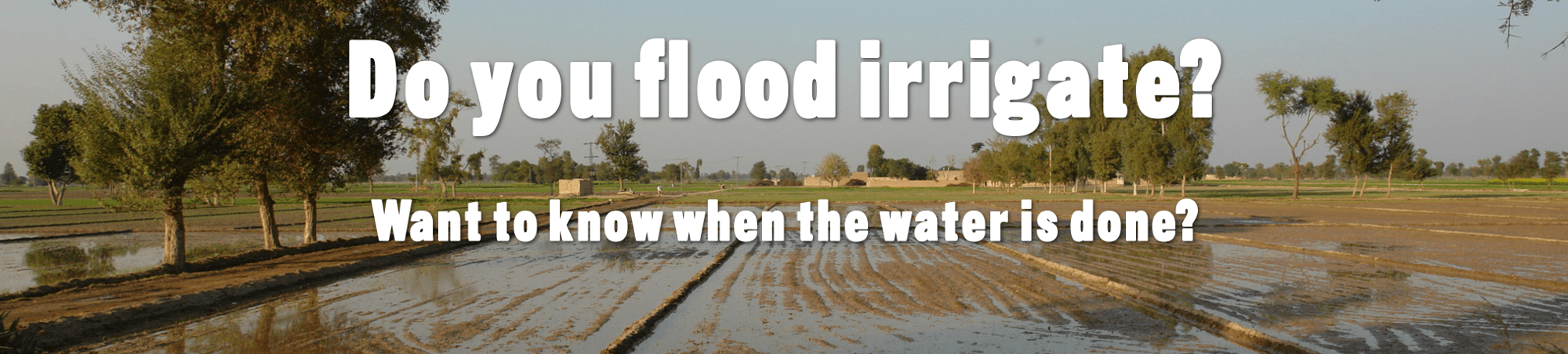 Do you flood irrigate