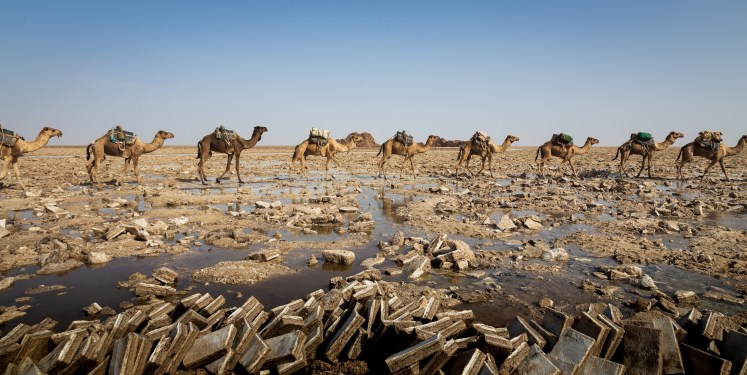 A camel caravan in the salt flats of the Danakil Depression.