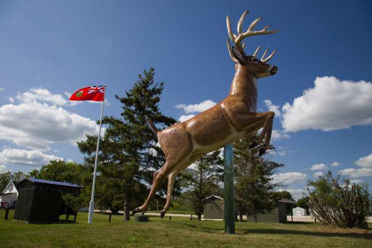 The King Buck or Poplarfield, Manitoba.