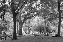 Serenity in Washington Square Park