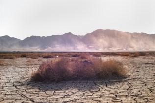 domus-04-changing-landscape