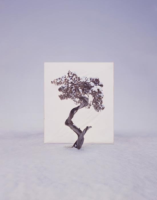 2.Myoung Ho Lee,  tree, contemporary (he)art, contemporary art, wevux, giulia serafin, arte contemporanea, alberi, natura, fotografia, tele, paesaggio, nature, photograpy, canvas, landscape, minimal, surreal, surreale, Corea, korean artist
