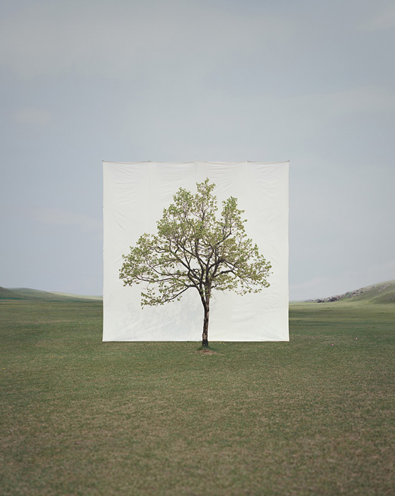 3.Myoung Ho Lee,  tree, contemporary (he)art, contemporary art, wevux, giulia serafin, arte contemporanea, alberi, natura, fotografia, tele, paesaggio, nature, photograpy, canvas, landscape, minimal, surreal, surreale, Corea, korean artist