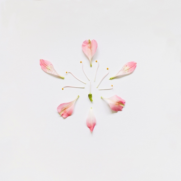 Qi-Wei-Photography-Peruvian-Lily