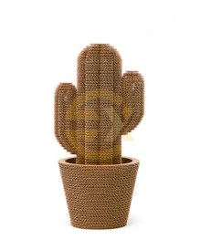 saguaro_medium