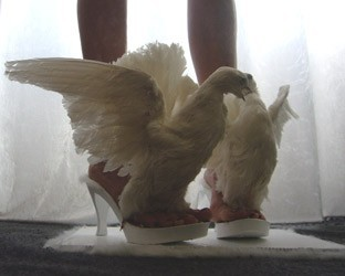 iris-schieferstein-scarpe-colombe