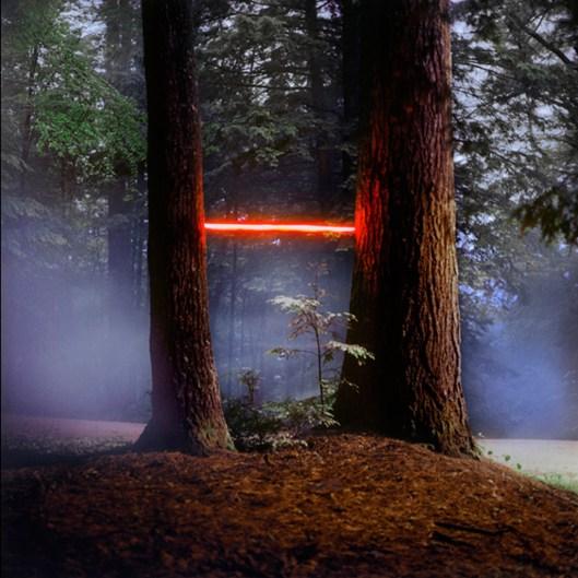 Tree-MacDowell-2013-Barry-Underwood