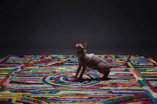 showdown-carpets_080116_06-800x533