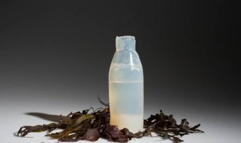 Algae-Water-Bottle-1020x610