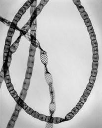 "Carl Strüwe, ""Alga-Freshwater (Alge Spirogyra setiformis"
