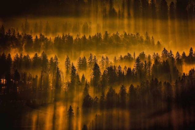 Thrilling-and-Mysterious-Pictures-of-Slovenian-Forests1-900x599