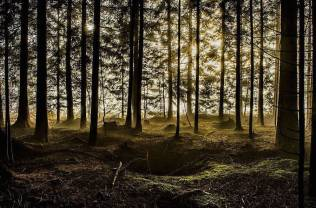 Thrilling-and-Mysterious-Pictures-of-Slovenian-Forests11-900x595
