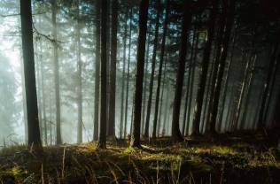Thrilling-and-Mysterious-Pictures-of-Slovenian-Forests13-900x595