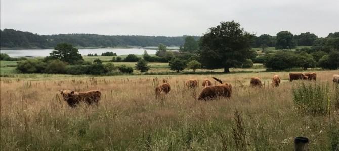 Via Jutlandica – Schleswig til Fockbek
