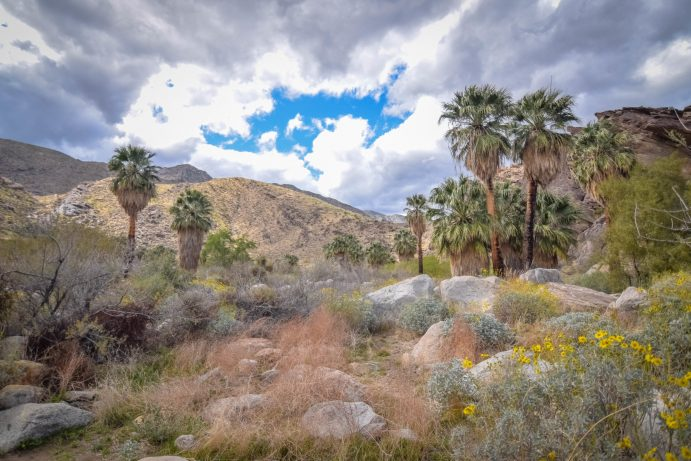 murray-canyon-trail (7)