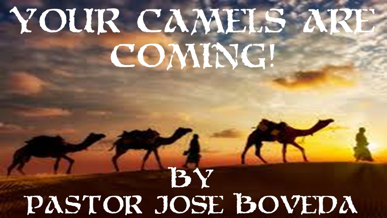 YOUR CAMELS ARE COMING!