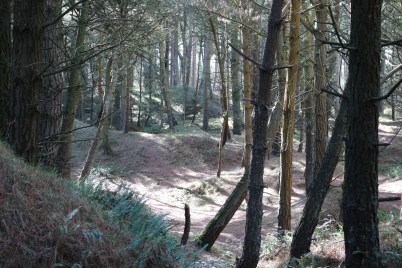 Curracloe Woods Culletens Gap 2017-02-27 (10)