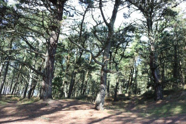 Curracloe Woods Culletens Gap 2017-02-27 (13)