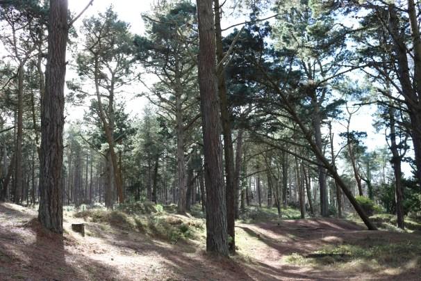 Curracloe Woods Culletens Gap 2017-02-27 (5)